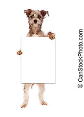 Terrier Dog Holding Blank Sign - A cute terrier crossbreed...