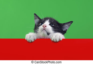 Small Domestic Cat Cutout - Small Domestic Cat Isolated on...