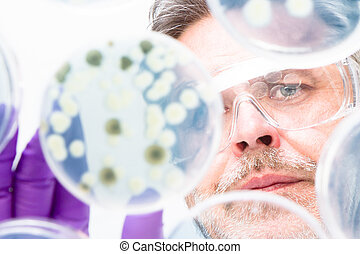 Senior life science researcher grafting bacteria - Focused...