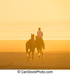 Horse riding on the beach at sunset. - Man horse riding on...