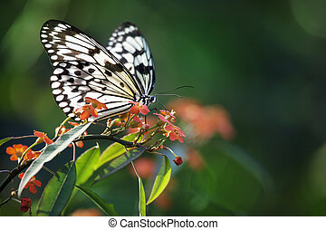 Beautiful butterfly on red flowers