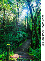 Passage in the primeval forest with sunlight.