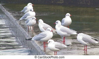 Gulls on the wharf.