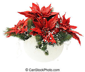 Poinsettia Plant with spruce branches in vase isolated on...