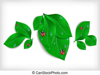 Green leaves with ladybirds and waterdrops - Illustration of...