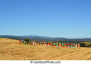 Rural wooden beehives on hilltop on the island of Chiloe,...