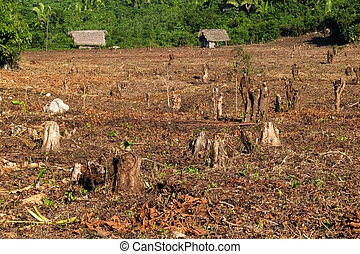 Destroyed tropical forest. - Destroyed tropical forest in...