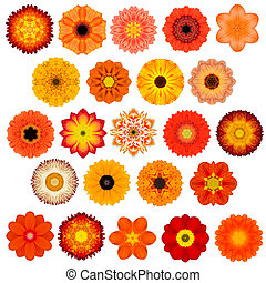 Large Selection of Various Concentric Mandala Flowers...