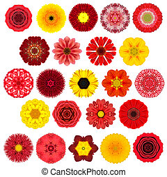 Huge Selection of Various Concentric Mandala Flowers Isolated on White
