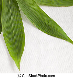 Detail of fresh green bamboo leaves - Close-up overhead...