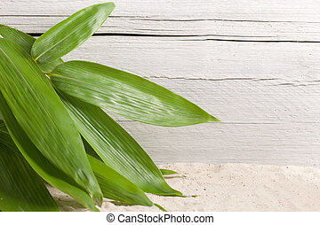Bunch of fresh ornamental bamboo leaves - Overhead view of a...