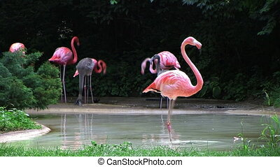 Flamingo Spinning Backwards - Flamingo spinning backwards...