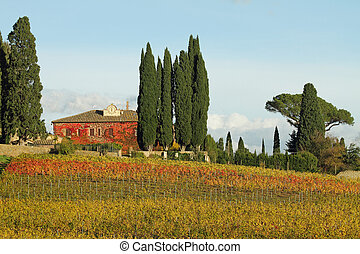 fantastic tuscan landscape with vineyards in autumnal colors...