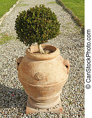 topiary boxwood bush in elegant ceramic vase