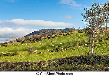 Scenic Landscape in Ireland