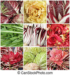 red, yellow and green chicory mix - collage with images of...