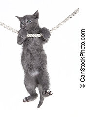 gray cat hanging on rope