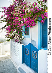 Bougainvillea in Santorini island - Flowers bougainvillea in...