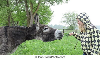 woman donkey feed grass - Cheerful smiling woman girl...