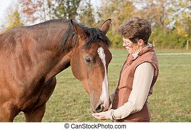 entrenador, alimentación, caballo