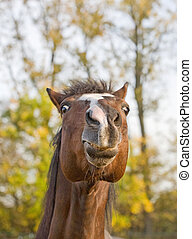Close-up of Horse Making Funny Face - A Close-up of a Horse...