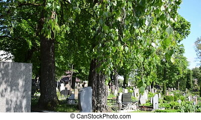 grave tomb stone tree - birch tree branches and leaves move...