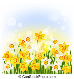 Spring flowers narcissus natural background.