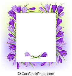 Spring flowers crocus natural background.