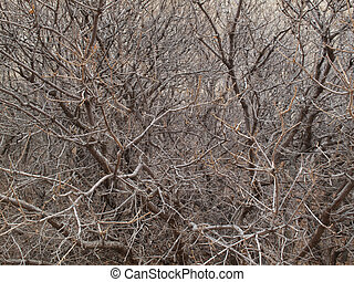 Bare branches entwined - Saturated with small trees and...