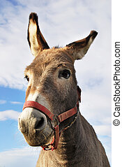 donkey - a portrait of ass with red head collar