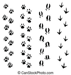 Trails of animals steps isolated on white background...
