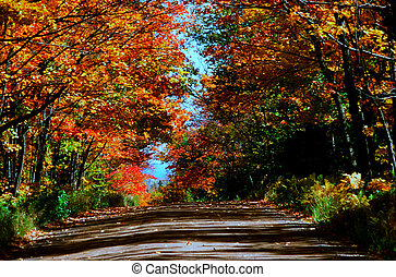 National Forest Roadway - Minnesota - Colorful autumn...