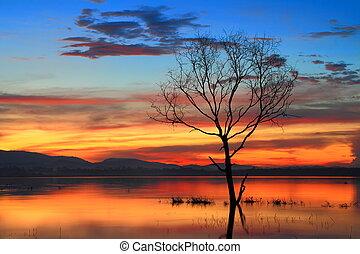 Dead trees at sunrise