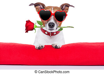 valentines day dog  holding a rose in his mouth