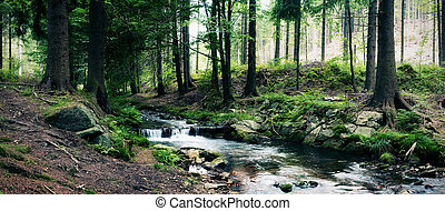 forest stream landscape or mountain panorama with river