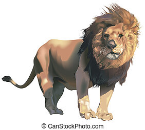 Male Lion - Colored Illustration, Vector