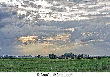 elephant - The elephant in amboseli national park of kenya.