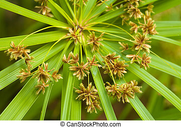 sedge plant flowers natural background