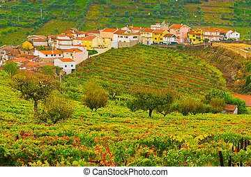 Vineyards - Extensive Vineyards on the Hills of Portugal