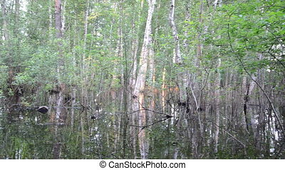 flooded forest tree - Flooded birch tree trunks underwater...