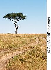 Trail and tree Masai Mara plais Kenya Africa - Trail and...