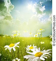 landscape - Field of daisies, blue sky and sun.
