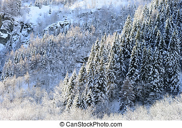 Winter panorama with snow clad forests - Winter panorama...