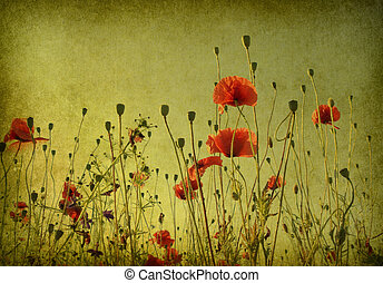 grunge poppies background - Photo of a poppies pasted on a...