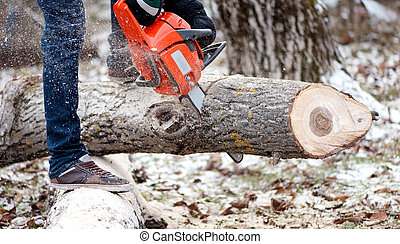 Agricultural activities - Man cutting trees with chainsaw