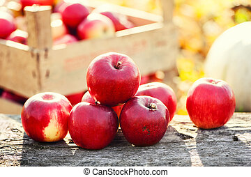 Red group of apples form autumn golden harvest Organic...