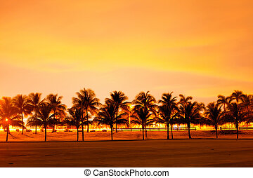 Colorful sunset or sunrise with silhoiuettes of palm trees