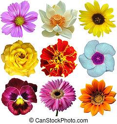 Set of botanical flowers - Set of flower isolated on white,...