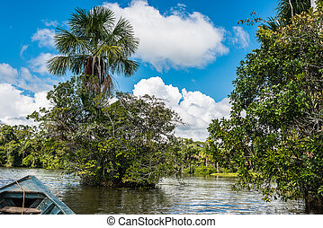 boat in the river in the peruvian Amazon jungle at Madre de...