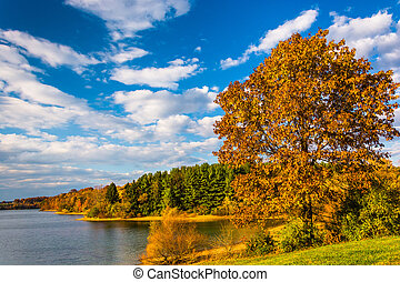 Autumn tree and view of Lake Marburg, at Codorus State Park,...